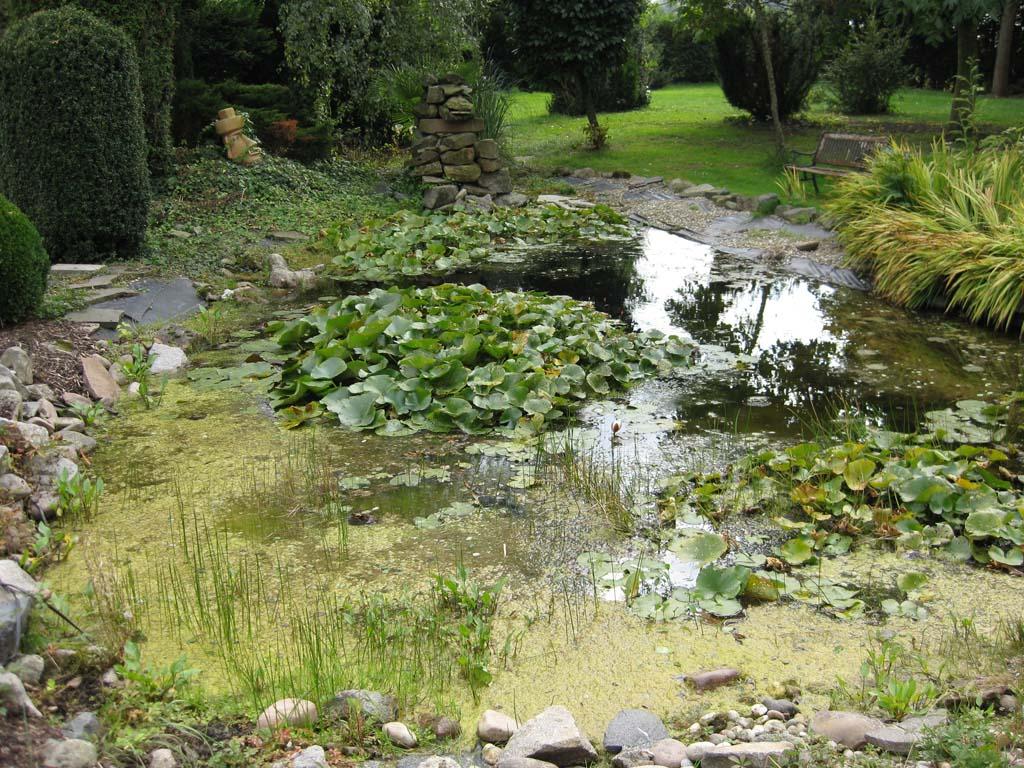 swimmingpool und teichanlagen cb gardens On teichanlagen beispiele